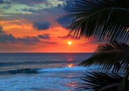海岛椰树自然风景图片_15张