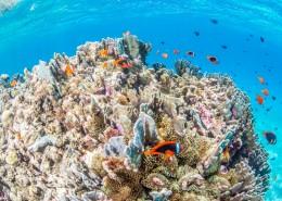 海底珊瑚鱼群图片_9张