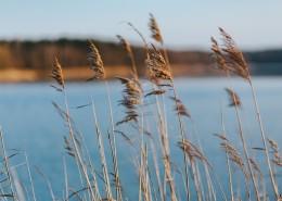 湖边的风景图片_12张