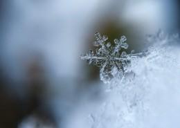 晶瑩的雪花圖片_16張