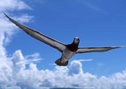 南太平洋的蓝天白云图片_38张