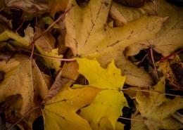 秋季落叶风景图片_12张