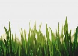 綠色的草地圖片_13張