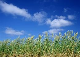 麦地丰收图片_26张