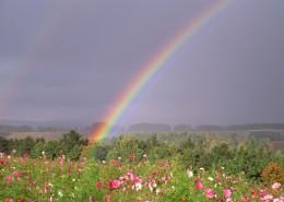 美麗彩虹圖片_6張