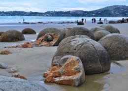 新西兰摩拉基大圆石图片_8张