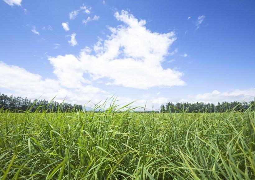 晴朗的天空和草地图片_67张
