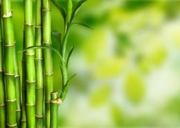 清涼的竹林圖片_15張