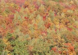 秋季森林图片_53张
