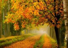 秋天的风景画图片_8张