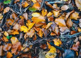 秋天的落葉圖片_15張