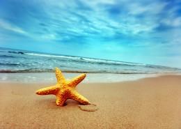 沙滩风情图片_52张