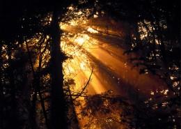 阳光下的树林图片_28张
