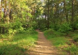 幽静的树林风景图片_9张