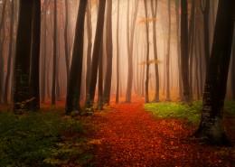树林迷雾景色图片_12张