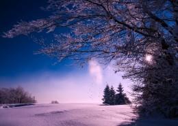 树上的积雪图片_10张
