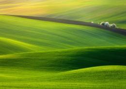 绿色的田野图片_11张