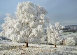 唯美的冬季雪景图片_6张