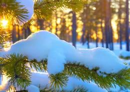 唯美雪景冬季風景圖片_14張
