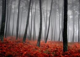 霧中美麗溫柔的世界圖片_36張