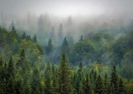 雾气缭绕的森林图片_10张