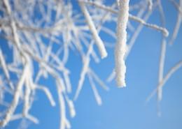 冬日冰冷的霧凇圖片_21張