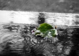 下雨天的雨滴图片_12张