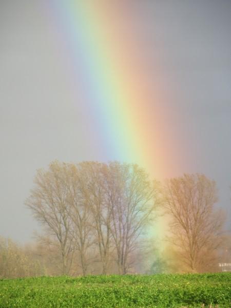 点击大图看下一张:绚丽的彩虹图片