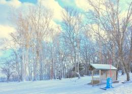 郊外的美丽雪景图片_10张