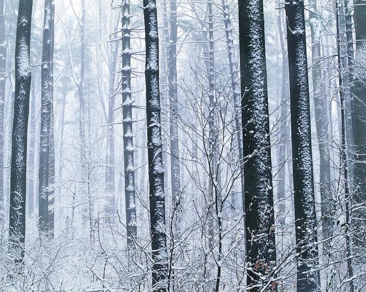 雪中树木图片_20张