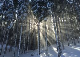 太陽光穿過樹林圖片_11張