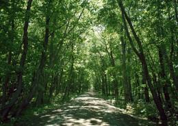 阳光树林图片_39张
