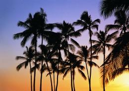 热带椰树绝美风景图片_19张