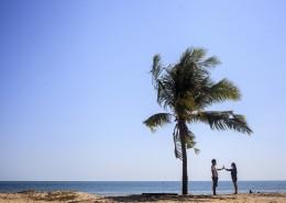 一棵孤独的椰树图片_10张