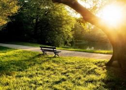 幽静的自然景色图片_9张