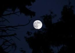 圆圆的月亮图片_14张