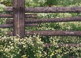 美麗的柵欄圖片_29張