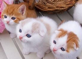 一组萌萌惹人怜爱的小野猫图片