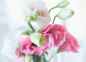 一组粉粉的特别有意境的康乃馨图片