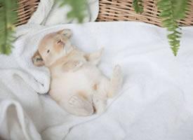 兔生的最大興趣愛好就是睡覺覺