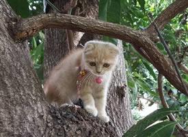 一只喜欢外出游玩可爱的小猫咪