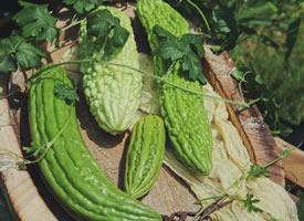 一组有意境感的蔬菜-苦瓜图片