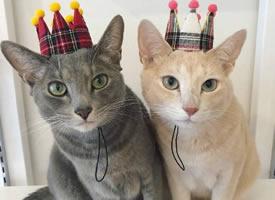 两只小猫相处久了长得越来越像