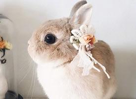 兔兔界的小仙女,羨慕它有這么多好看的頭飾