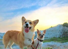 一组萌萌哒的狗狗和天空的合影图片