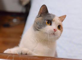 一组脸上两个颜色可爱的小猫图片