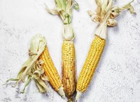 玉米也可以拍的很有艺术感