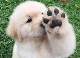 一组可爱狗狗打招呼的搞怪图片欣赏