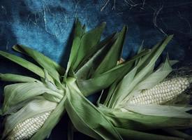 一组很嫩的玉米意境拍摄图