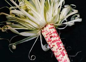 一组很有创意的玉米拍摄图片